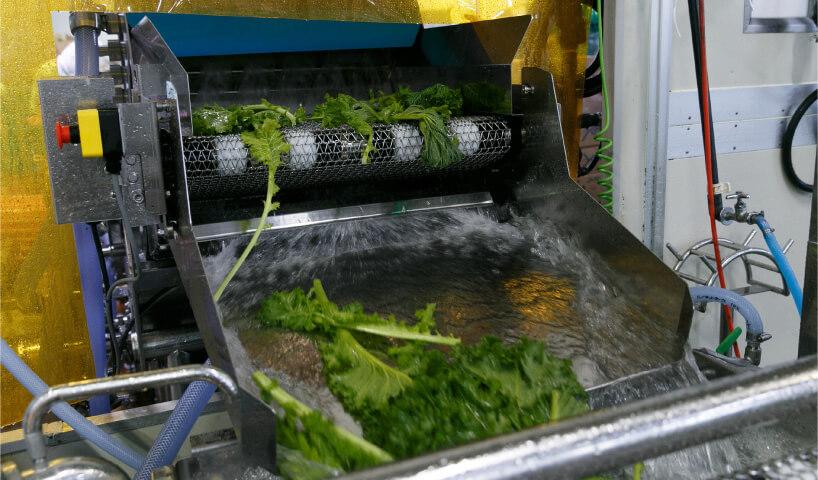 野菜の検査・洗浄